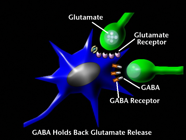 how to make brain produce gaba